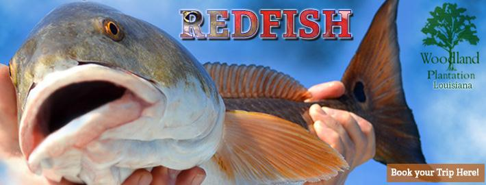 Louisiana Redfish Trip