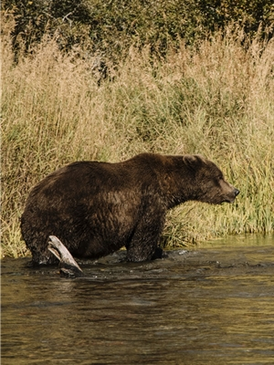 alaska katmai trophy lodge mad river outfitters trip Fly Fishing Trips