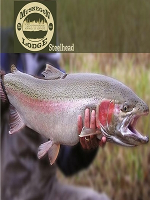 Spring Steelhead- Muskegon River Fly Fishing Trips
