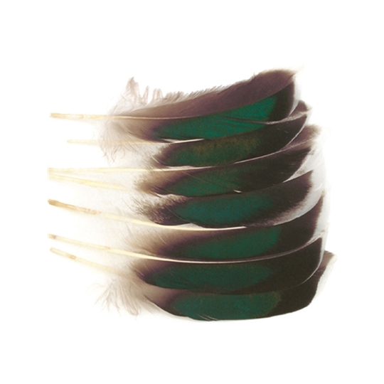 mallard mcginty quill feathers