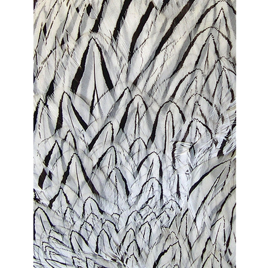 Silver pheasant feathers