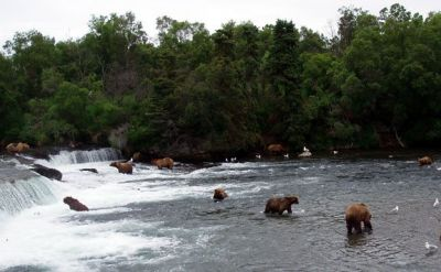 Mad River Outfitters week at the Naknek River Camp always includes a trip to Brooks Falls